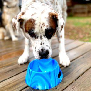Silipint Dog Bowl