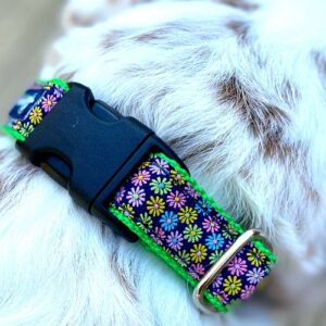 Large Dog Buckle Collars Made In The USA