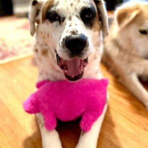 Pink Fuzzy Stuffed Piggy Dog Toy