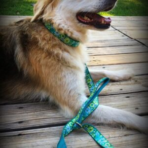 Rainey with daisy stripe dog leash