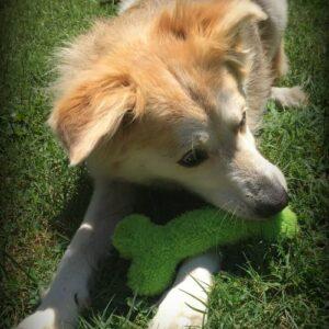 Rainey with dog bone toy