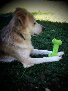 Rainey with fuzzy dog bone toy for dogs