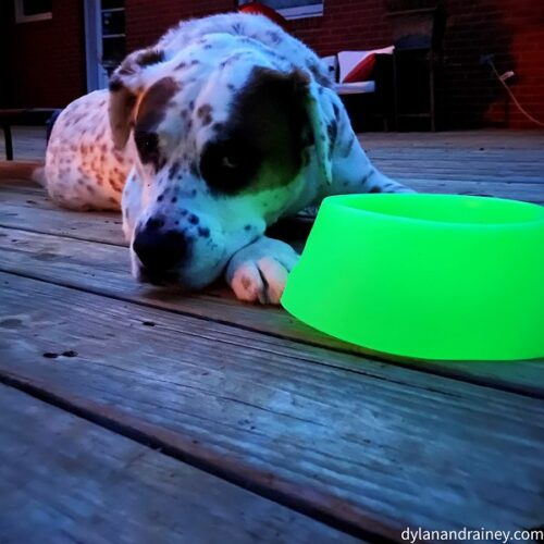 glow in the dark dog bowl