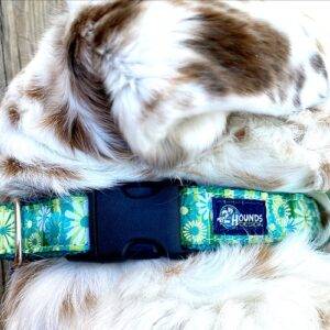 quick-release dog collar