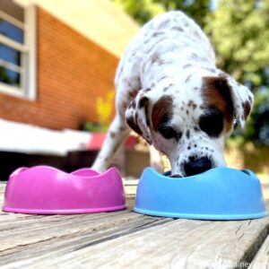 BPA Free Dog Bowls Made From Recycled Bamboo