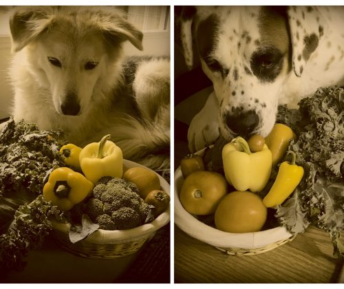 safe foods for dogs