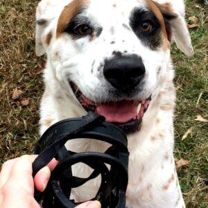dog likes muzzle