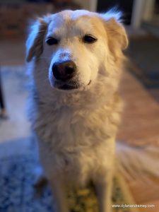 How to Help an Anxious Dog