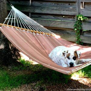 dog in summer heat