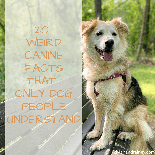 canine facts