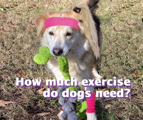 dogs need how much exercise