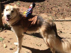 keep dog safe halloween
