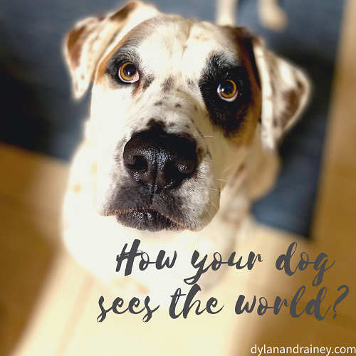 How your dog sees