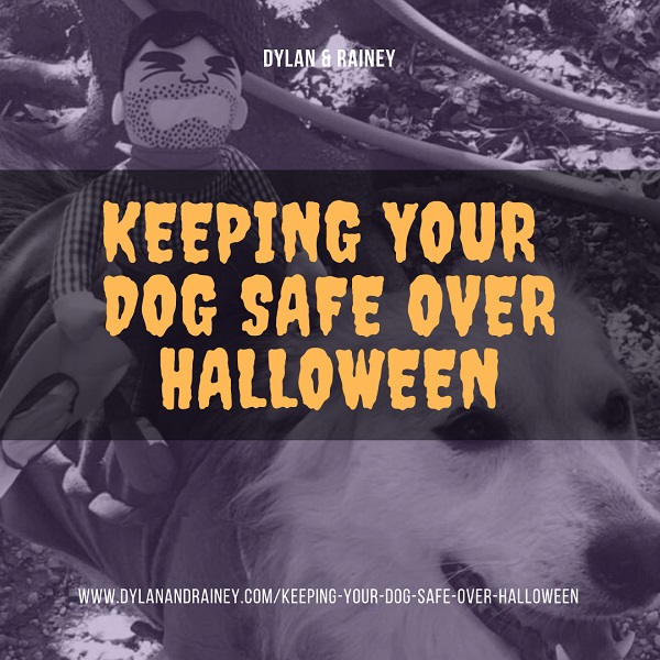 keeping your dog safe over halloween