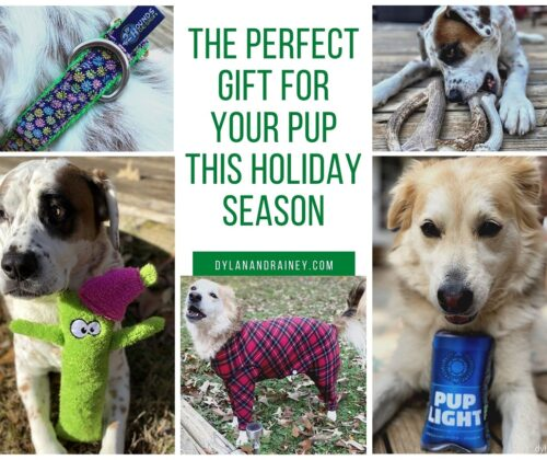 perfect dog gift for holidays