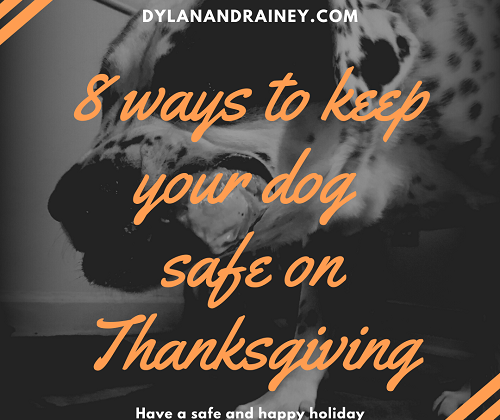 keep your dog safe on Thanksgiving