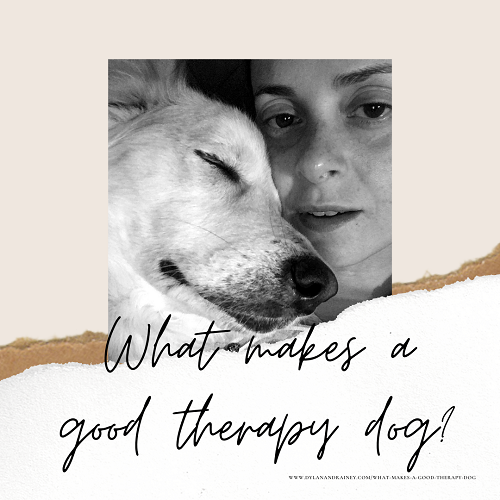 good therapy dog