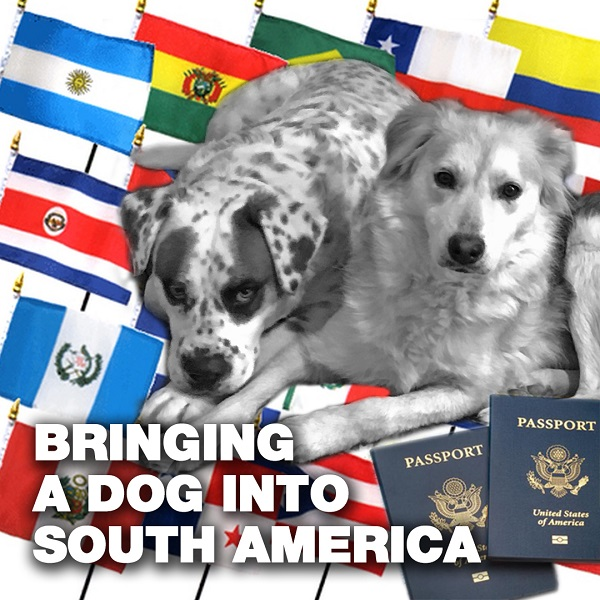 bringing your dog into south america