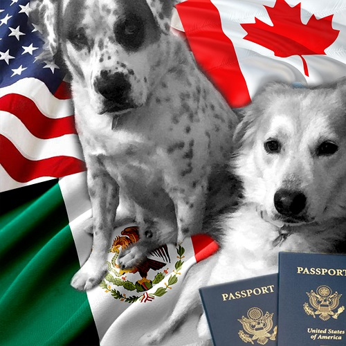 bringing a dog into north america