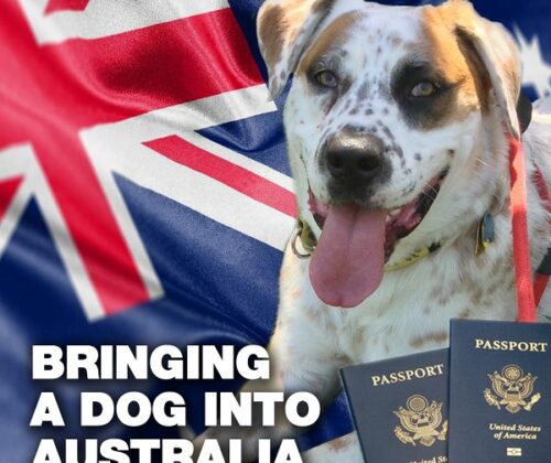 bringing your dog into Australia