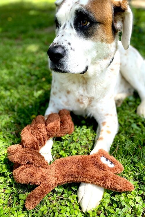 squirrel dog toy USA made