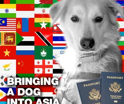 bringing your dog into asia