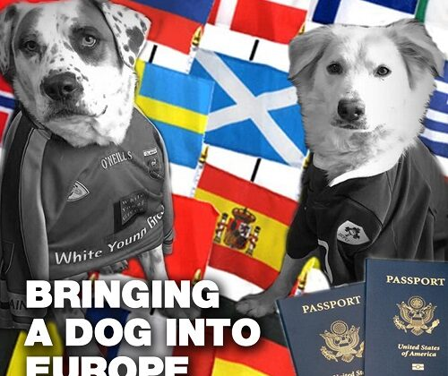bringing your dog into Europe
