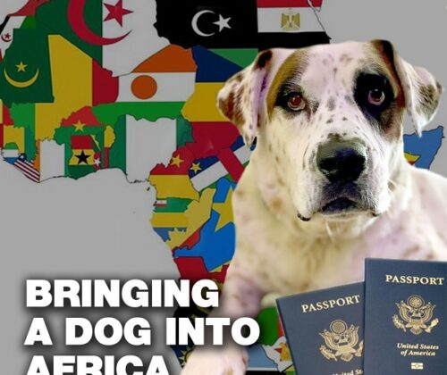 Bringing your dog into Africa