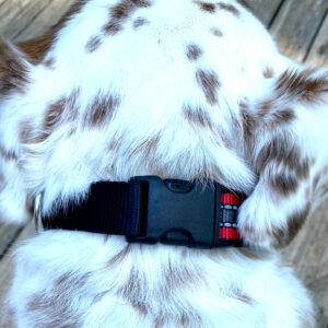 Reflective Buckle Dog Collar