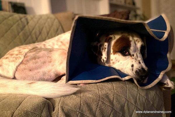 pet insurance for Dylan